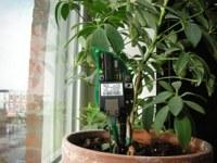 Plantas que se comunican contigo por Internet gracias a Botanicalls