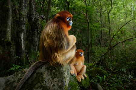 Nueve fotógrafos españoles entre los ganadores del Wildlife Photographer of the Year 2018