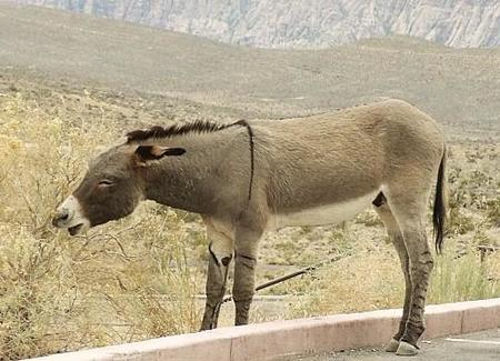 Singularidades extraordinarias de animales ordinarios (VIII): el burro