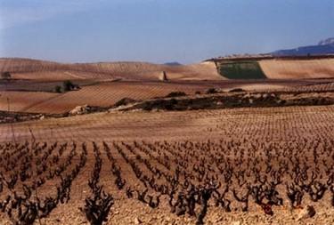El vino de la Rioja en peligro por el cambio climático
