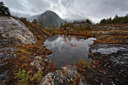 Patagonia Bosques Patagonicos Foto De Paolo Petrignani