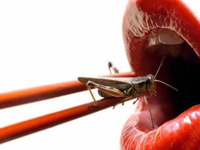 [Vídeo] El potencial alimenticio de los insectos