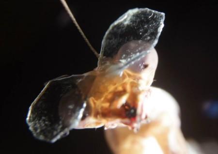 Una mantis con gafas 3D nos hace plantearnos cómo entendemos el espacio tridimensional