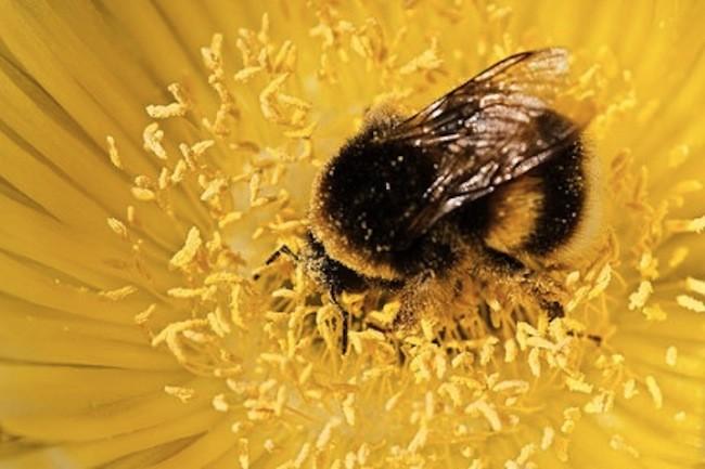 ¿Cómo deciden las abejas dónde instalar su casa?