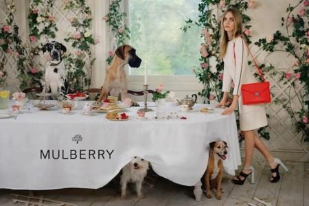 cara mulberry perros
