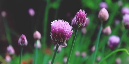 Flor10