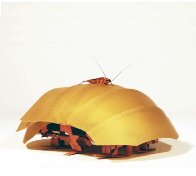 Roachonroach