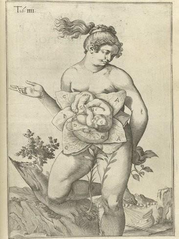 La anatomía del embarazo en ilustraciones antiguas