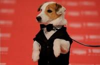 El perro de la primitiva protagonizará su propia película