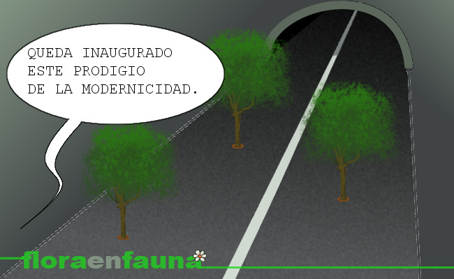 fauna en ruta: árboles en el camino