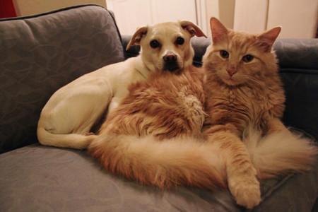 Cinco razones por las que los dueños de mascotas son más felices y saludables