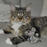 Un ingeniero ha creado una inteligencia artificial que evita que su gato le lleve animales muertos a casa