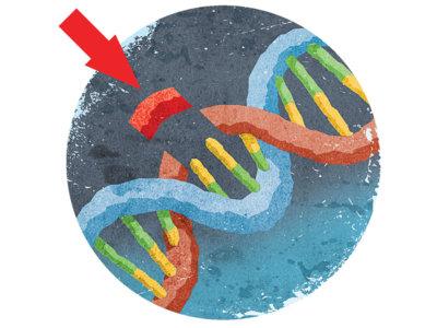 La herramienta de edición genómica CRISPR podría ser utilizada en seres humanos muy pronto