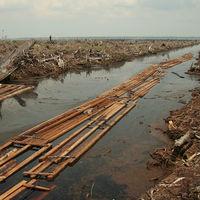 Historia de una exageración: la realidad detrás de los datos de deforestación por aceite de palma