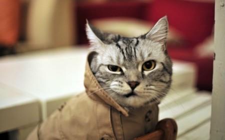 33 momentos que demuestran que el gato es el animal más troll del mundo