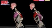 Variaciones en los dips para tríceps, ¿qué músculos implican?