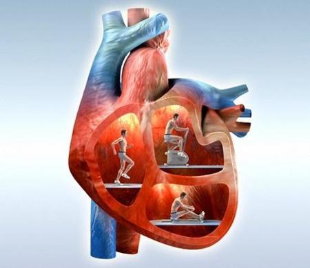 La posición del cuerpo afecta a la frecuencia cardíaca