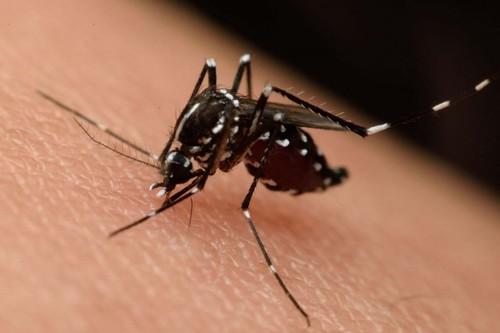 """Ante el auge de dengue en México, la solución podría estar en """"hacer más sanos"""" a los mosquitos"""