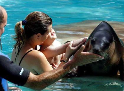 Terapia con leones marinos para niños autistas