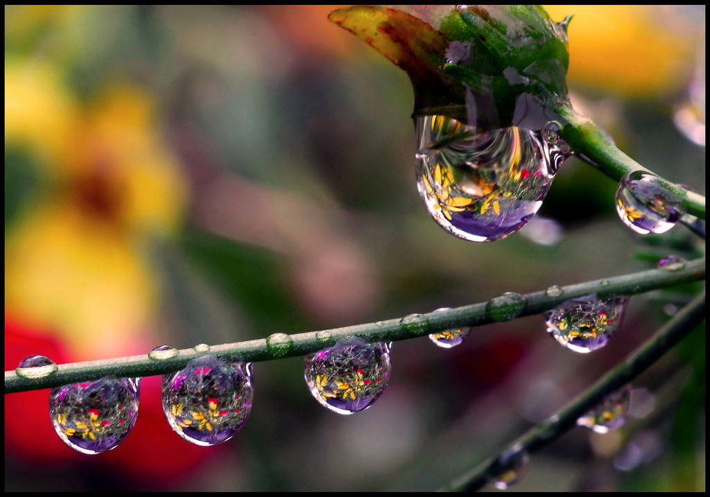 Foto de La belleza de una gota de agua (25/25)