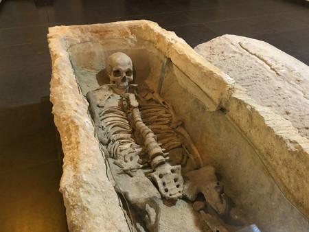 Antropologia Elche Alcudia