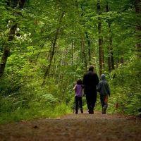 Distintas especies de árboles colaboran entre sí para producir más madera