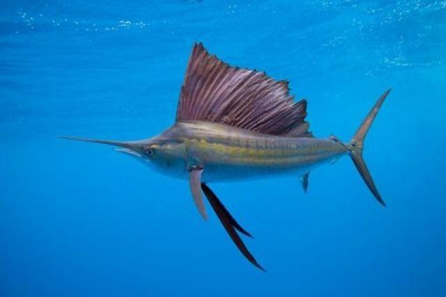 [Vídeo] Contemplando la criatura que se mueve más rápido en el agua