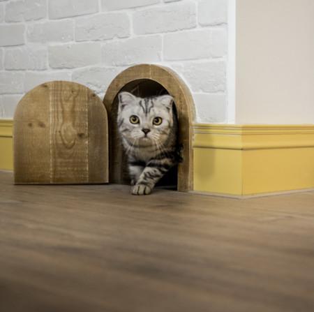 Casa Gatos 3