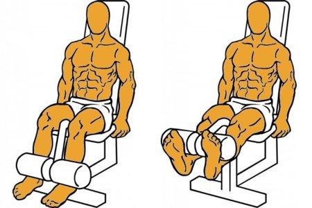 Guía para principiantes (XXVI): Extensión de piernas en máquina