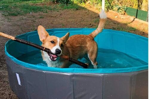 Las mejores piscinas para mascotas según los comentaristas de Amazon