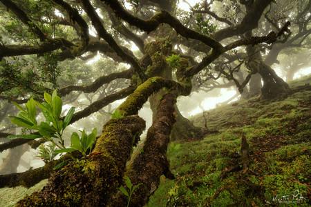 Martin Podt Forest 8