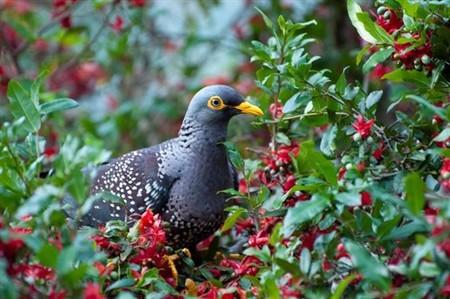 Las pájaros que viven en las ciudades prefieren mudarse a los barrios más ricos (también en Sudáfrica)