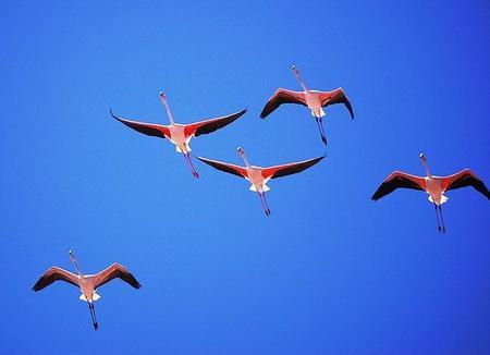 Avistamiento de aves en la provincia de Sevilla