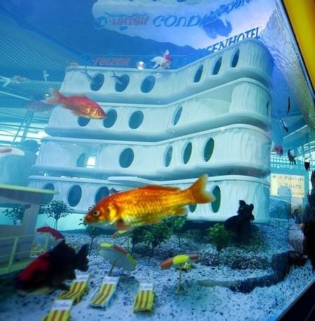 Gold Fish Hôtel en Amsterdam: los peces también van de vacaciones