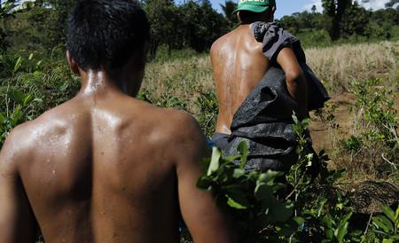 En Colombia, la coca triunfará sobre el café (o la miel) por una simple razón comercial