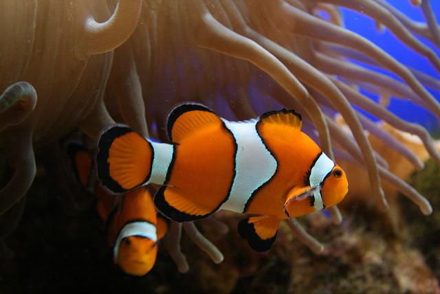 El di xido de carbono afecta a los peces marinos for Acuarios para peces marinos