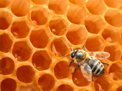 Nuevos datos sobre la miel y su poder antioxidante