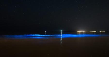 Cuando el mar luce de noche