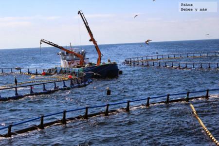 Pescado Acuicultura