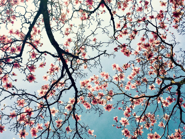 019 Qinglan Qu Flowers 3rd