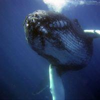 Por qué el sónar es un peligro para la fauna marina y cómo lo estamos sustituyendo