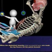 ¿Hasta dónde subimos en los abdominales? Análisis anatómico de un curl-up y de un sit-up