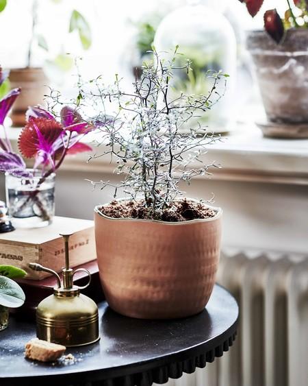 Ikea Coleccion Botanisk