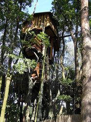 Hotel Baumhaus: dormir en la copa de un árbol