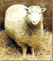 Singularidades extraordinarias de animales ordinarios (XXXI): la oveja
