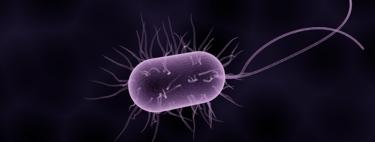 La cuarta parte de los microbios de la Tierra nunca se han cultivado y no sabemos qué hacen
