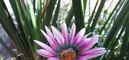 México y el mundo tienen una crisis de abejas, esto es lo que está sucediendo y esto podemos hacer para solucionarlo