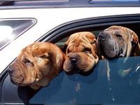 Consejos para viajar con tu mascota en el coche