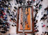 Grandes Museos: el Natural History Museum de Londres
