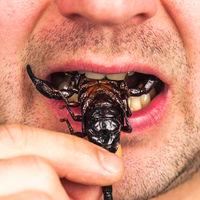 Siete beneficios de comer insectos